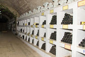 Wine collection in winnery — Stock Photo