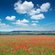 Big poppy meadow — Stock Photo #9839565