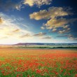 Big poppy meadow — Stock Photo #9839576