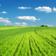 Big green meadow — Stock Photo