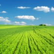 Stock Photo: Big green meadow