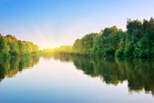 River and spring forest. — Stock Photo