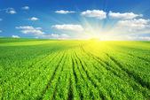 Büyük yeşil çayır — Stok fotoğraf