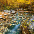 Autumn river — Stock Photo #9840580