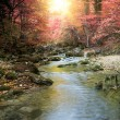 River in autumn forest — Stock Photo
