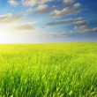 Green meadow on the sunset - Stock Photo
