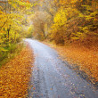 Road in autumn wood. - Stock Photo