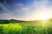 Spring meadow — Foto de Stock