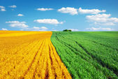 Colorful meadow — Stock Photo