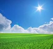 Gran prado verde — Foto de Stock