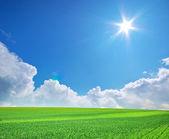 большой зелёный луг. — Стоковое фото