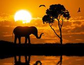 Silhouette of elephant — Stock Photo
