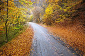 Road in autumn wood. — Foto de Stock