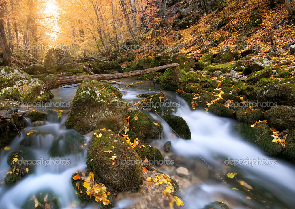 Autumn wood and river flow. Composition of nature. — Stock Photo #9840590