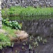 Trim castle wall and moat. — Stock Photo