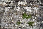 Stone wall fragment — Foto de Stock