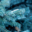 Winter background — Stock Photo #8088971