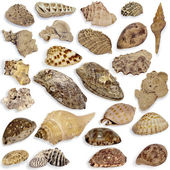 Collection seashell — 图库照片