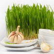 Healthy food - garlic and Germinated Wheat seeds - Stock Photo