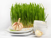 Healthy food - garlic and Germinated Wheat seeds — Stock Photo
