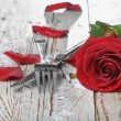 Romantic dinner setting with red rose and petals — Stock Photo