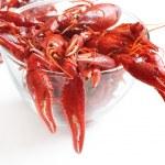 Boiled crawfish on white background — Stock Photo #9640191
