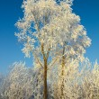 Beautiful ice winter tree — Stock Photo