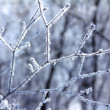Royalty-Free Stock Photo: Ice tree branches