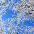 Frozen tree branches under blue sky — Stock Photo