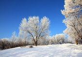Snow winter park under blue sky — Stock Photo