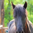 Brown horse portrait — Stock Photo