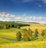 Paisagem de verão colinas — Foto Stock