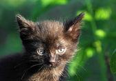 Little black kitten outdoor — Stock Photo