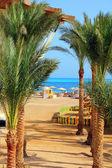 Palmami a tropickou pláž — Stock fotografie