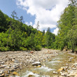 Stock Photo: Small mountain river flowing through the fir forest