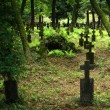 Old graveyard in Khust, Ukraine - Stock Photo