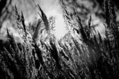 Close-up dry grass — Stock Photo