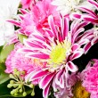 Pink aster background — Stock Photo #8433114