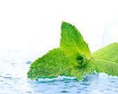 Freshness mint — Stock Photo