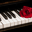 Piano keyboard and rose — Foto Stock