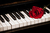 Piano keyboard and rose — Stock Photo