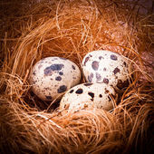 Quail's Eggs — Stockfoto