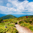 Stock Photo: Path in mountains