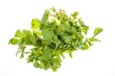 Closeup photo of fresh coriander, cilantro (Leaves & Roots) on white background — Stock Photo