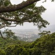 Stock Photo: Chinese jungle, island of Hainan
