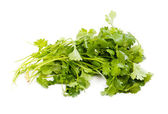Fresh organic raw coriander leaf isolated on white background. C — Stock Photo