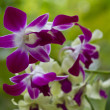 Beautiful orchid - phalaenopsis — Stock Photo #8776563