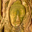 Buddha head encased in tree roots at the temple of Wat Mahatat i — Stock fotografie