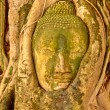 Buddhhead encased in tree roots at temple of Wat Mahatat i — Stock Photo #8777987