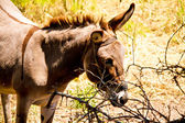 âne dans un champ en journée ensoleillée, série animaux — Photo